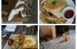 cat cafe in Taipei #EatDrinkiManRuth